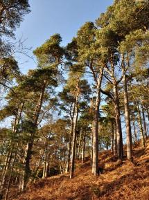 Corbet Wood