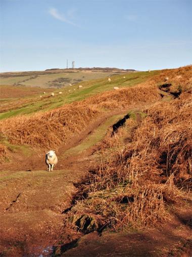Path through the bracken