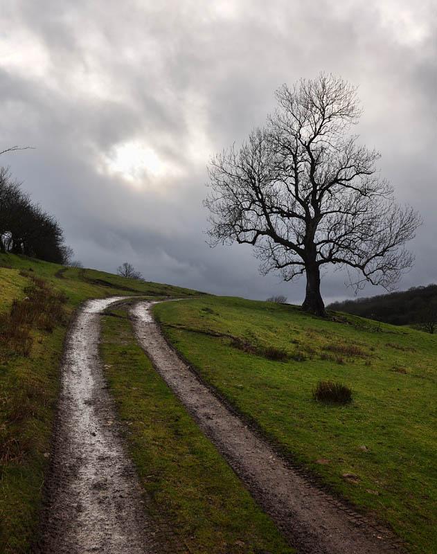 Cwms Farm tree