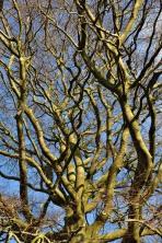 Tangled tree