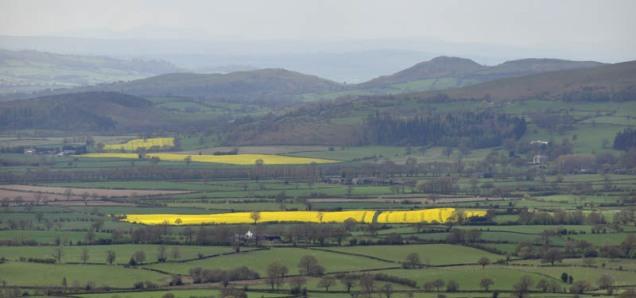 Cader view