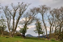 Caradoc through the trees