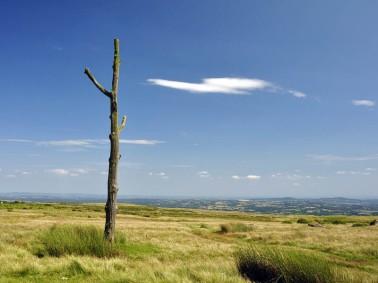 Boundary tree
