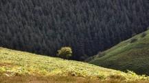 Tree above Minton Batch