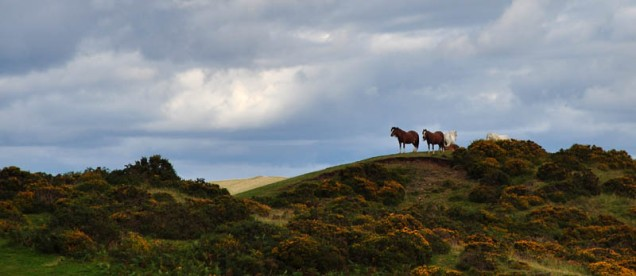 Wild horses on Plush Hill