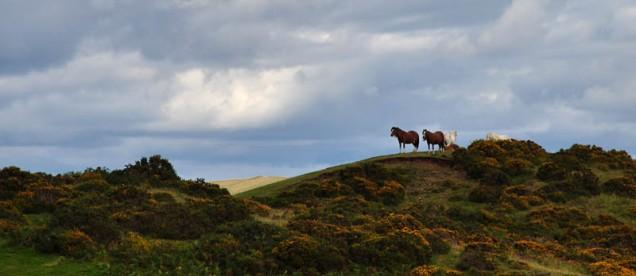 Wild horses on Plush Hill
