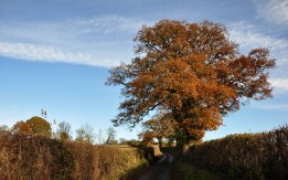 Autumn's last gasp