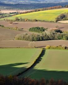 Leinthall fields