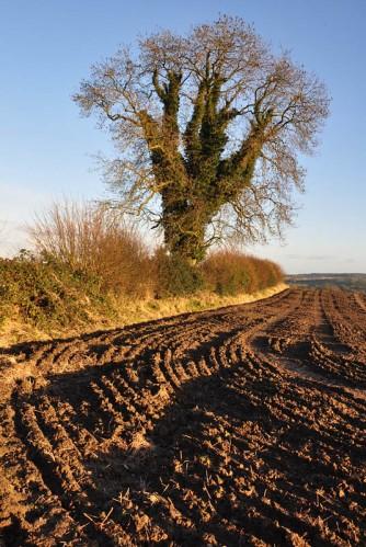 Harrowed land