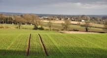 Stripy fields