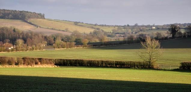 Wenlock fields