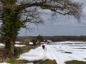 Walk in the snowfields