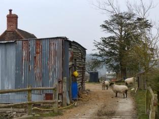 Wetmore Farm