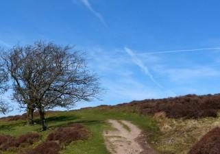 Shropshire Saltire