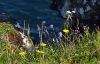 Clifftop floral