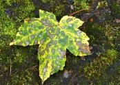 Spotty leaf