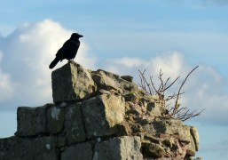 Beeston crow