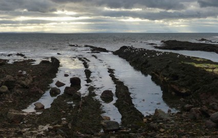 Pittenweem rocks