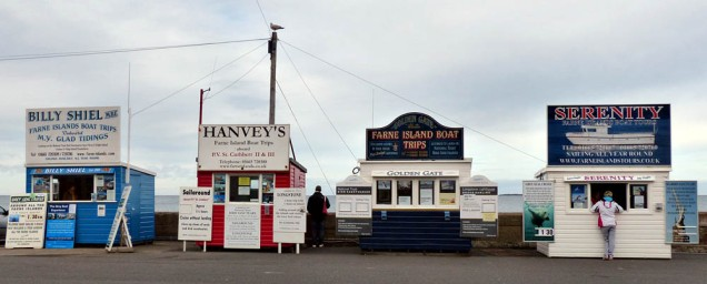 Take a trip to the Farne Islands