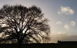 Inett tree