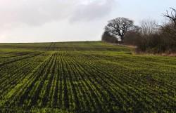 Next year's crop