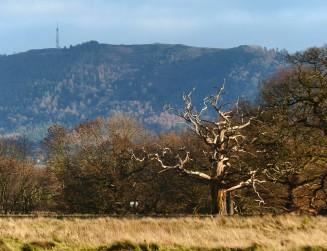 Tree and Wrekin