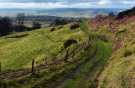 Clee hillside