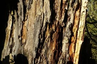 Dead wood