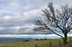 Tree and Hope Bowdler