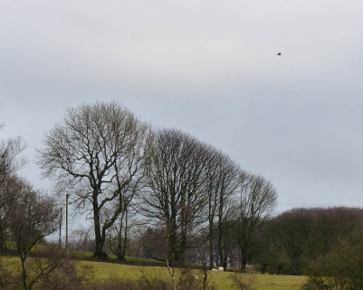 Trees beside the lane