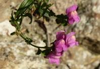 Wall flower 2