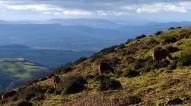West with wild ponies