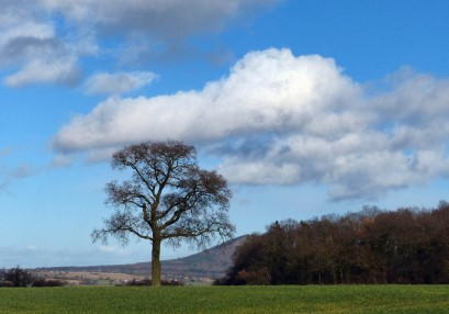 Harnage tree and Wrekin