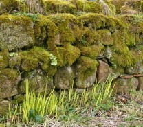 Moss on the wall