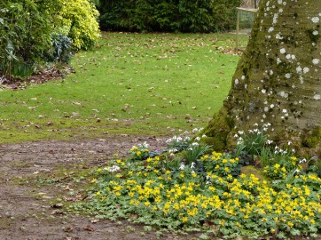 Snowdrops and celandines