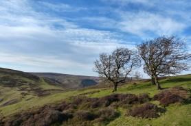 A Shropshire hillside