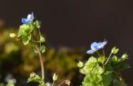 Blooms beneath the battlements