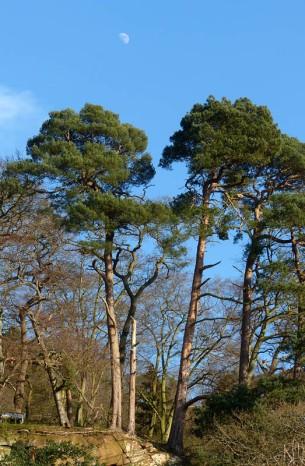 East bank pines