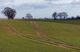 Lines in the fields