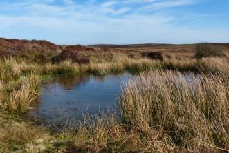 Mynd Pond