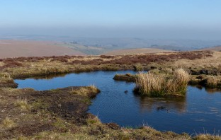 Peaty pool on Warren Bank