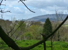 A view to the Wrekin