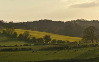 Distant yellow