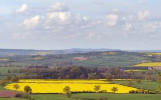 Fields of sunshine