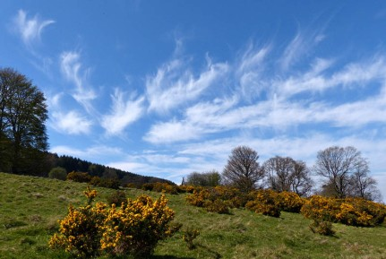 Gorse and cirrus antlers