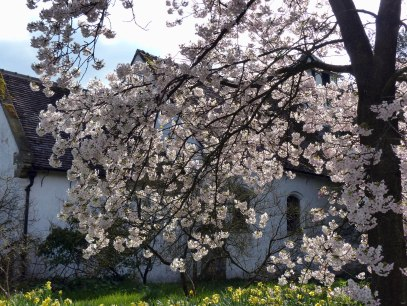 More blossom at Benthall