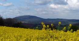 Oil-seed rape and the Wrekin
