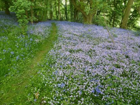 A woodland carpet