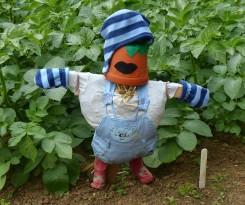 Junior scarecrow