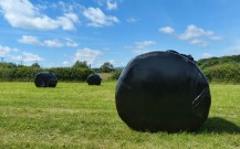 Sileage bales